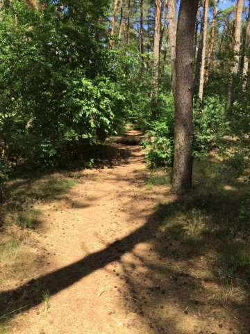 Auf der Binnendüne im Wald