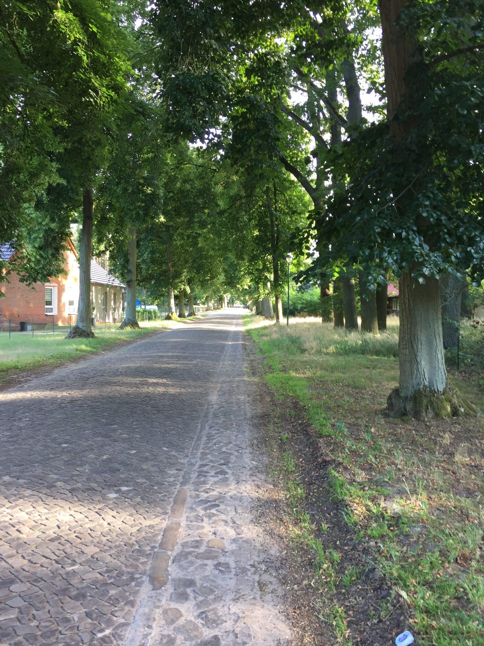 Lindenallee in der Altmark