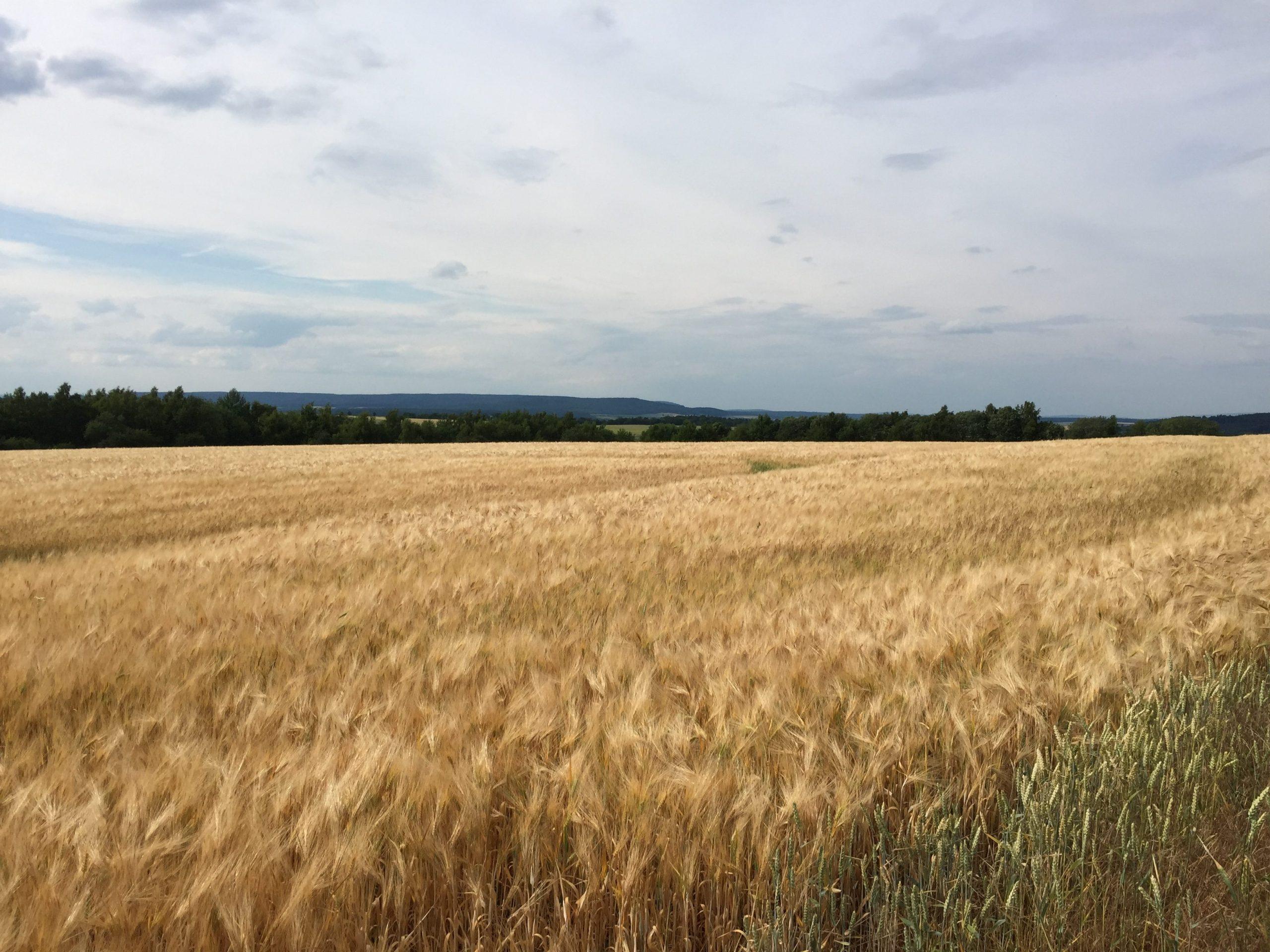 Fahrt entlang der Getreidefelder