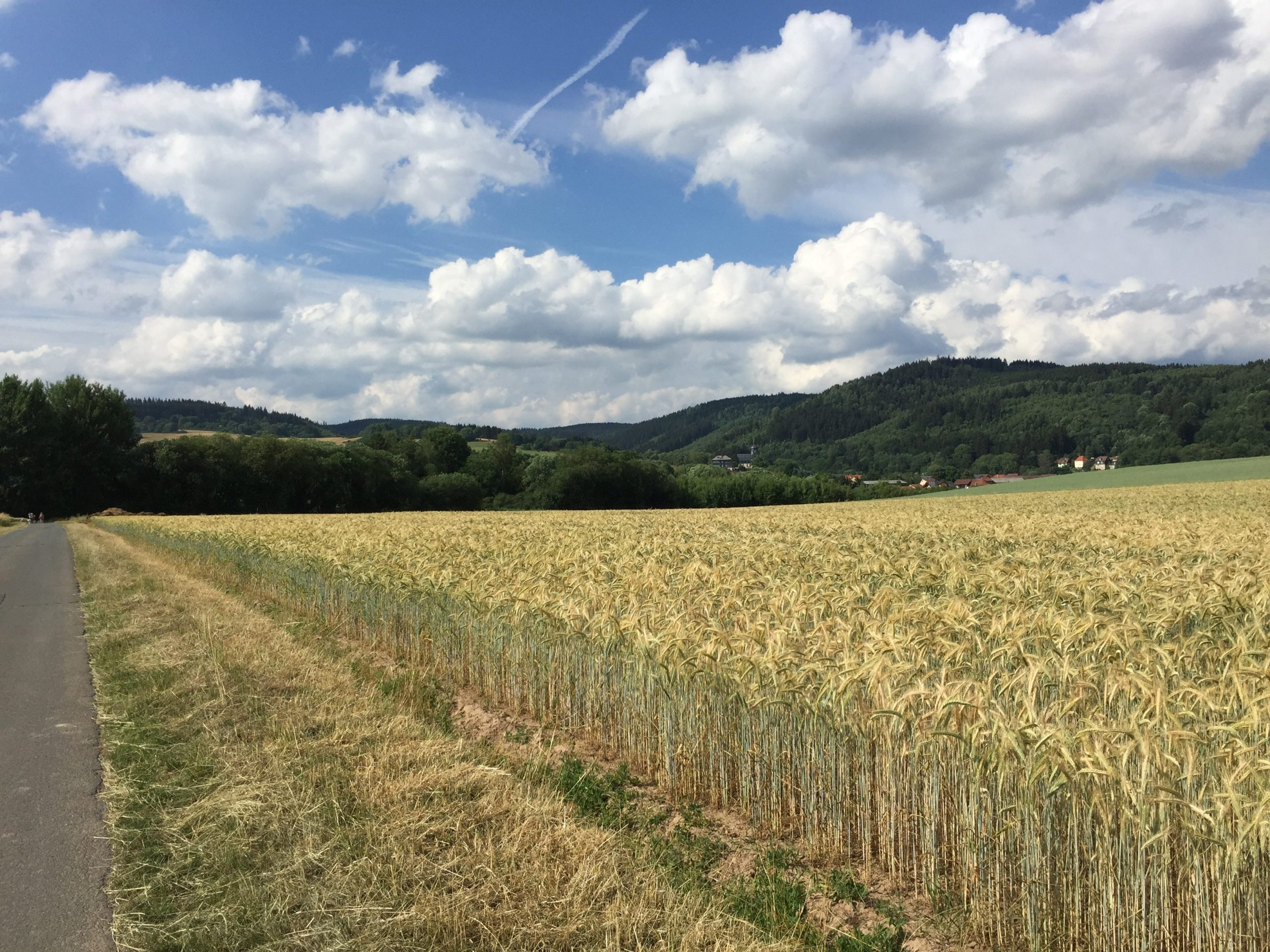 Wieder eines dieser Getreidefelder