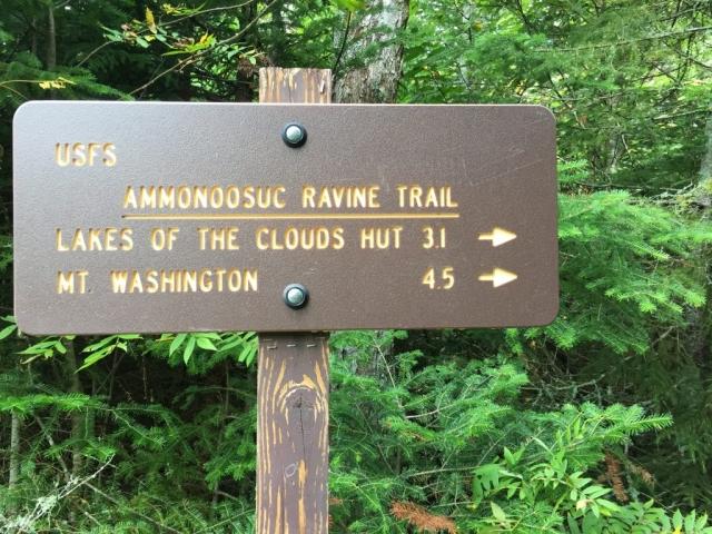 Start des Amonoosuc Ravin Trails